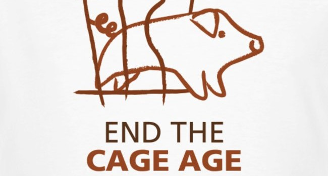pig end cage age
